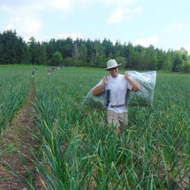 Le petit mas produits ail du qu bec guide de culture biologique - Recolte de l ail ...